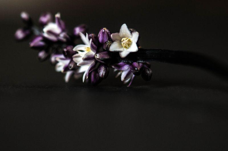 mondo grass flowers